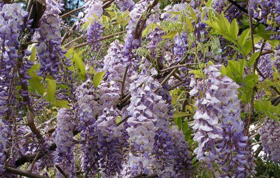 flores 17