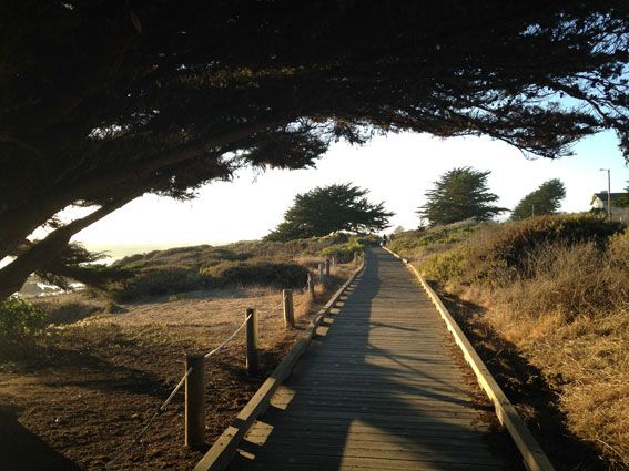 CAMBRIA-MOONSTONE-AND-PINES