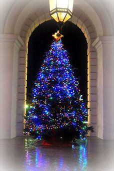 CHRISTMAS-TREE-PASADENA-CITY-HALL