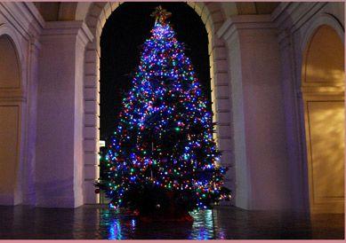 CHRISTMAS-PASADENA-TREE