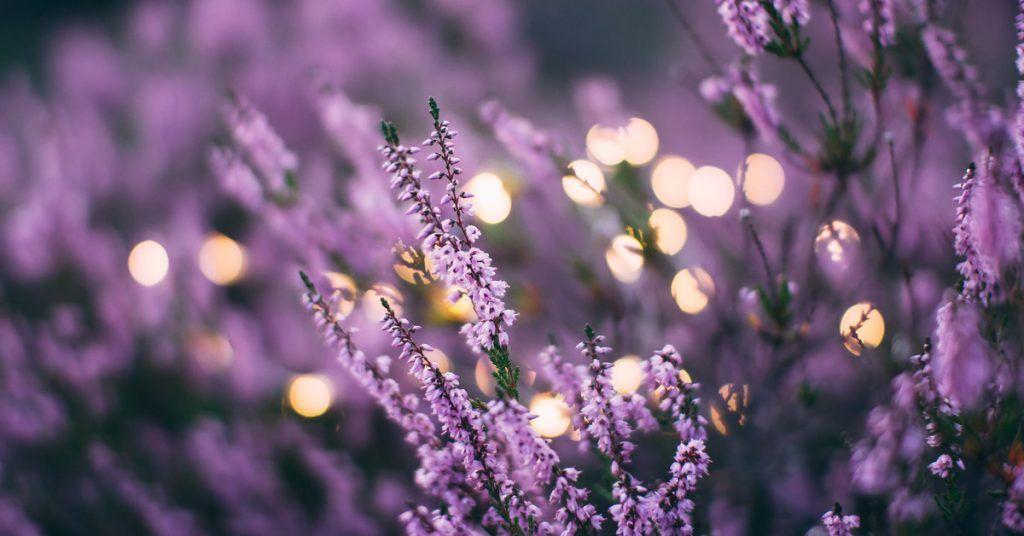 color purpura